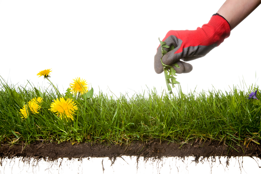 Welcome to Barry Landscape & Maintenance Services - Welcome To Barry Landscape & Maintenance